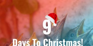 Four Calling Birds - 9 Days To Christmas!
